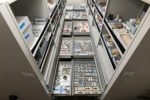 Preservation: Life, Death, and the Afterlife in the Museum