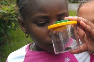 Family Hike: Pollinators