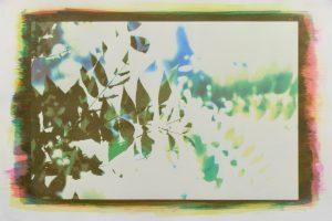 Art Workshop: Cyanotype Printing for Families