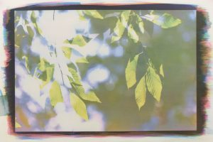 Art Reception - Between the Leaves (Sarah Cross)