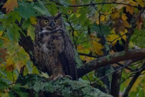 Owl Prowl Adventures under the Moon for Families