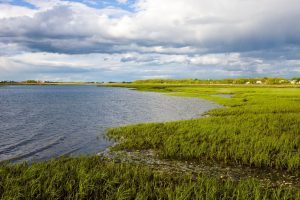 Nature On Tap...Building Resilience to Climate Change Through Nature