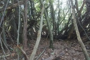Forest Bathing with Lara Wilson