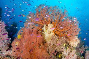 Travel & Taste: Exotic Fiji