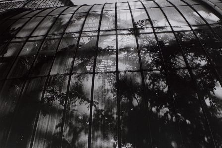 Opening Reception for Warm Room: Photographs by Peter A. Moriarty from Historic Greenhouses