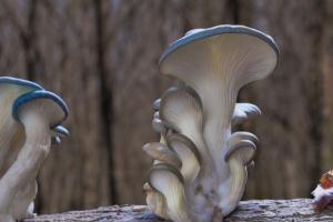 Fantastic Fungi virtual screening