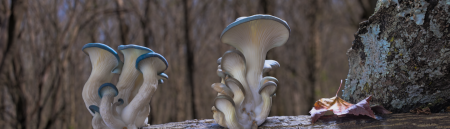 Fantastic Fungi virtual screening