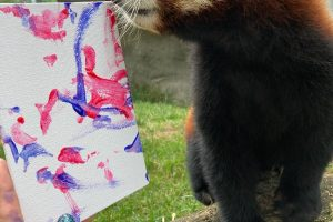 Place a bid in Zoo New England's Animal Art Auction!