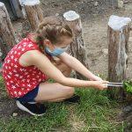 Stone Zoo Introduces New Tortoise Encounter & ...