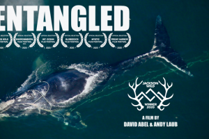 Virtual Film Screening: Entangled