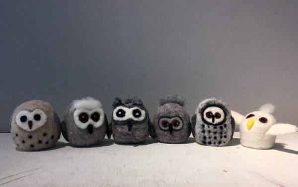 Owls (@ Home)