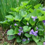 Walk: Useful Plants Among Us