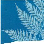 Cyanotypes: Alternative Printing Techniques