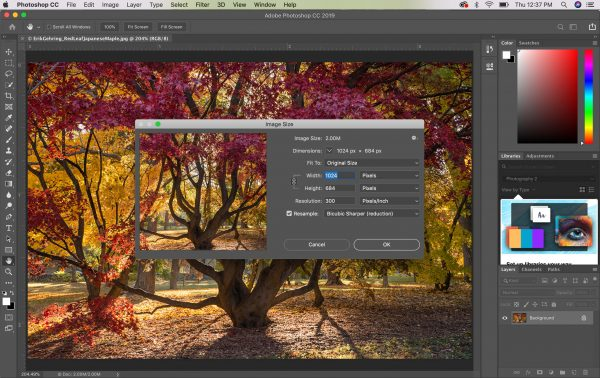 Organizing and Preparing Digital Images for Submis...
