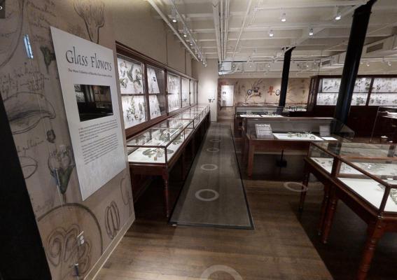 Virtual Glass Flowers Tour