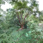 A Walk in the Arboretum: Digital Photocollages by Amy Ragus