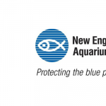 Learn About Invasive Species in Boston Harbor