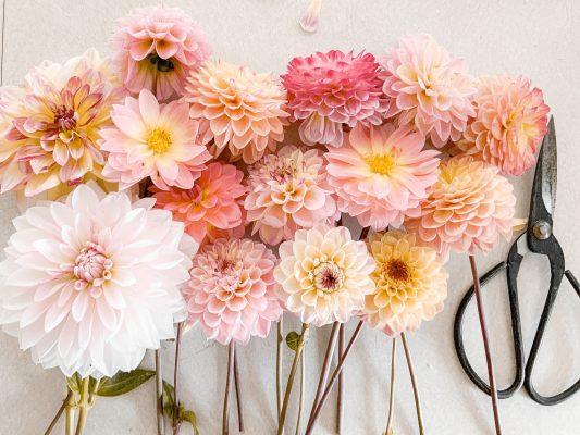 Darling Dahlias Flower Arranging Class