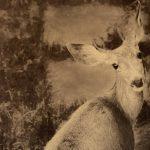Rhonda Lashley Lopez – Life Narrated by Nature