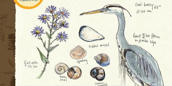 OUTDOORS: Clare Leslie Walker, Keeping a Nature Journal