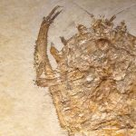 National Fossil Day (Free Virtual Event)