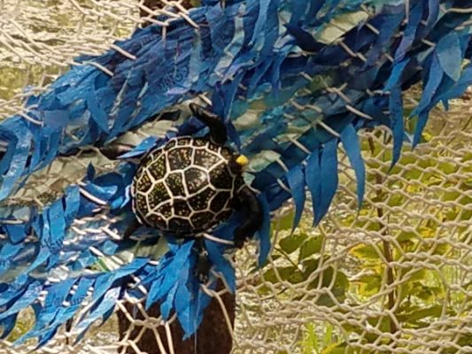 Fishy Crafts with Artists Laurie Bogdan and Kimber...