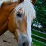 Windrush Farm Therapeutic Equitation