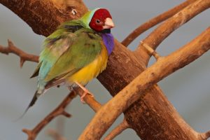 primary-Get-WILD-about-birds-this-winter-at-Franklin-Park-Zoo--1483567796
