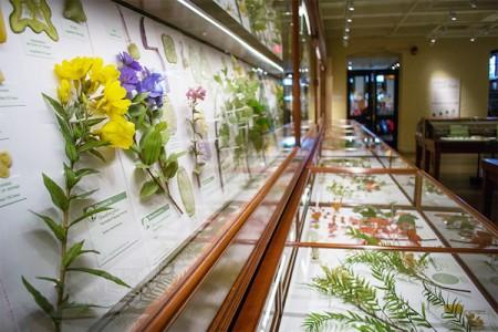 Glass Flowers Soiree
