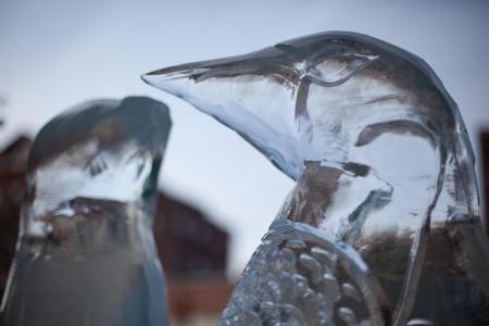 primary-Northampton-Ice-Art-Festival-1476729631