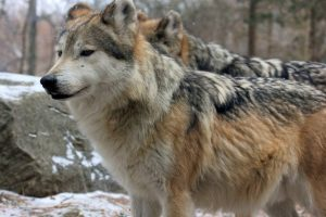 Play the Animal Way at Stone Zoo during February Vacation Week
