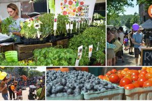 Roslindale Village Farmers Market Opening day and Green Mobility Day