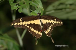 Summer Photography Workshop: Focus on Butterflies, Wildflowers & more