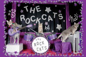 The Amazing Acro-cats Bounce into Boston
