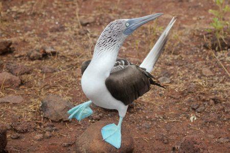 primary-Travel---Taste--Galapagos-1483496901