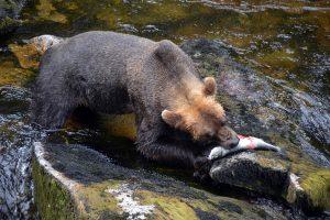 primary-Travel---Taste--Wilds-of-Alaska-1483496320